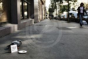 Photo d'un pigeon mendiant dans une rue de Paris dans l'indifférence des passants