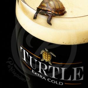 Photomontage d'une petite tortue penchée dans une pinte de bière brune