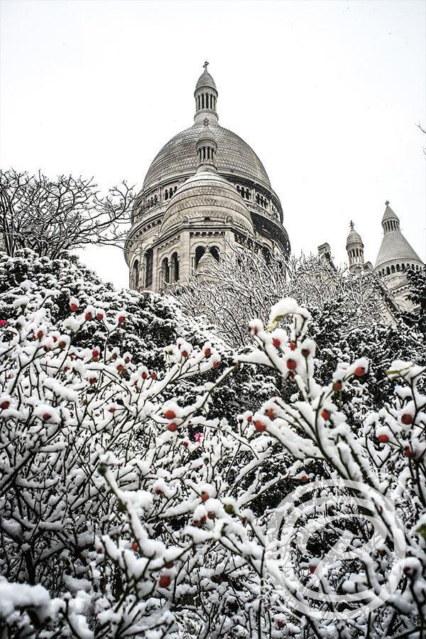 Baies rouges sous la neige devant le Sacré Cœur